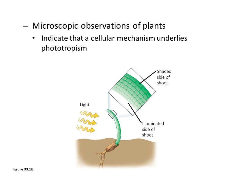 Microscopic observations of plants