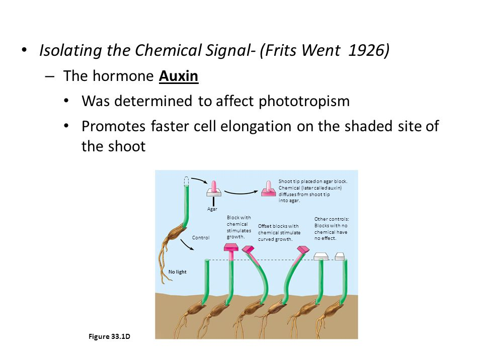 Isolating the Chemical Signal- (Frits Went 1926)