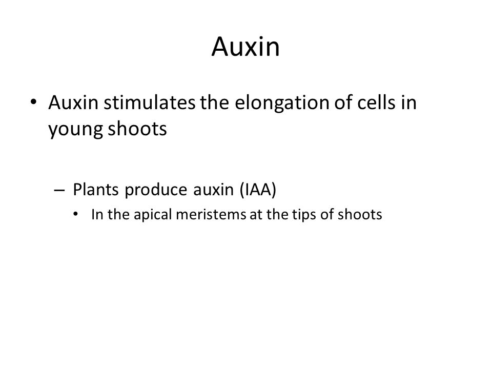 Auxin Auxin stimulates the elongation of cells in young shoots