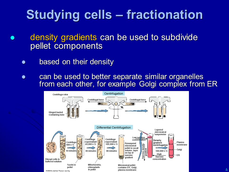 Studying cells – fractionation