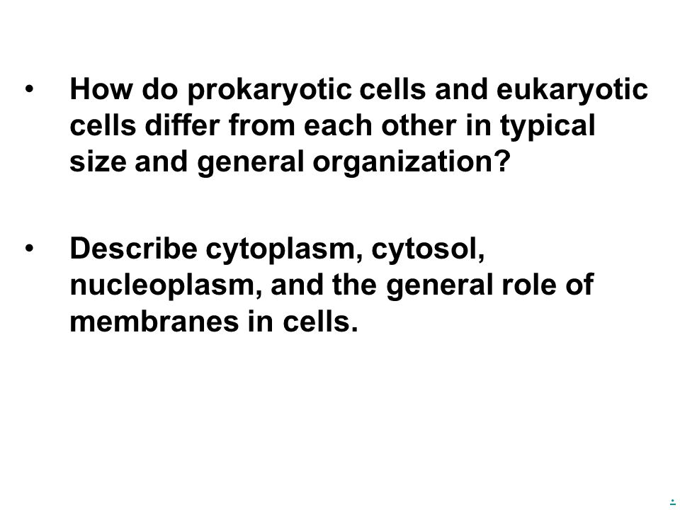 How do prokaryotic cells and eukaryotic cells differ from each other in typical size and general organization