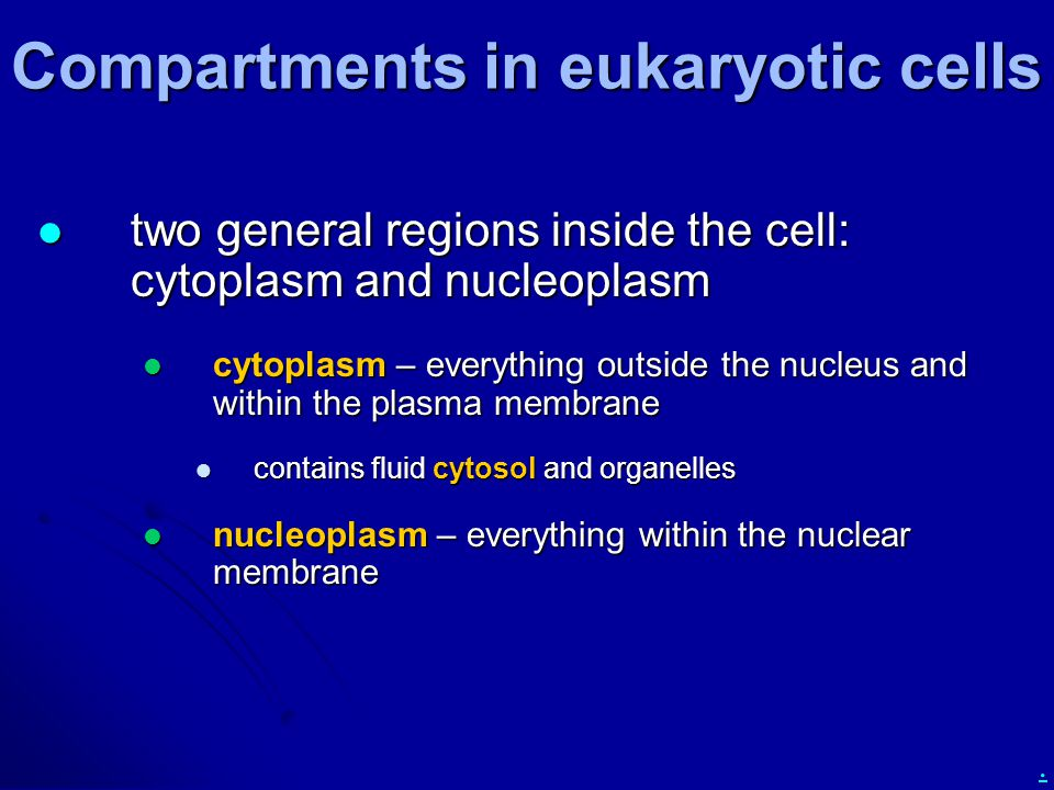 Compartments in eukaryotic cells