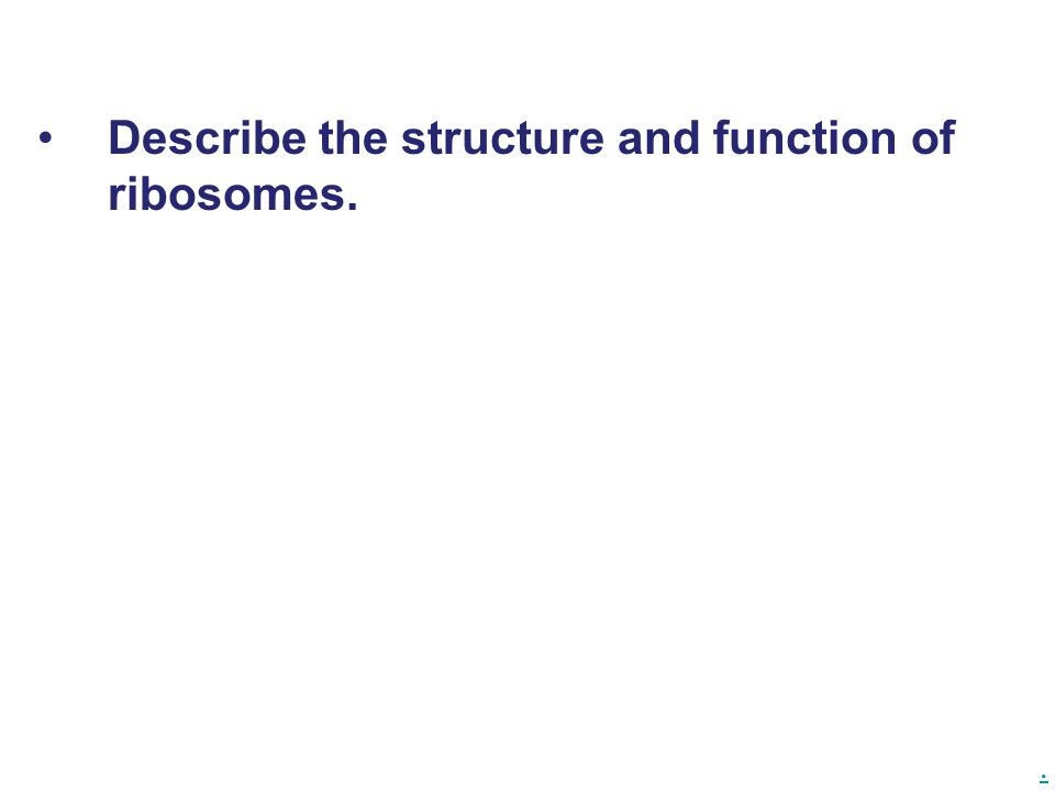Describe the structure and function of ribosomes.