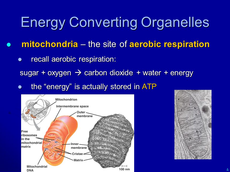 Energy Converting Organelles