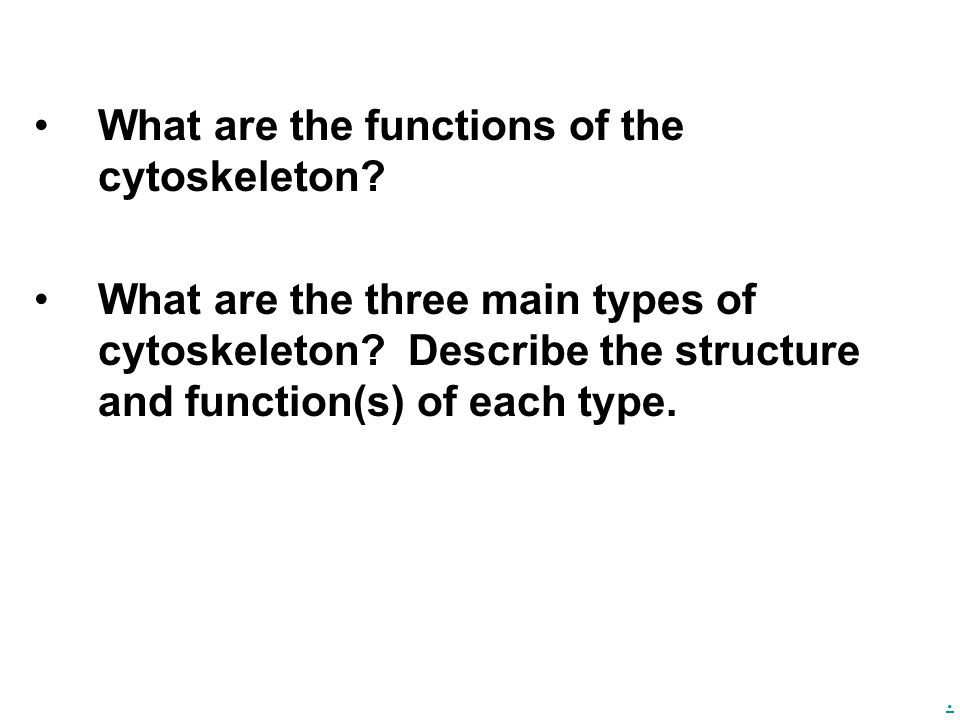 What are the functions of the cytoskeleton