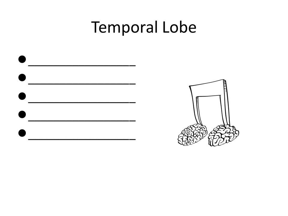 Temporal Lobe _________________