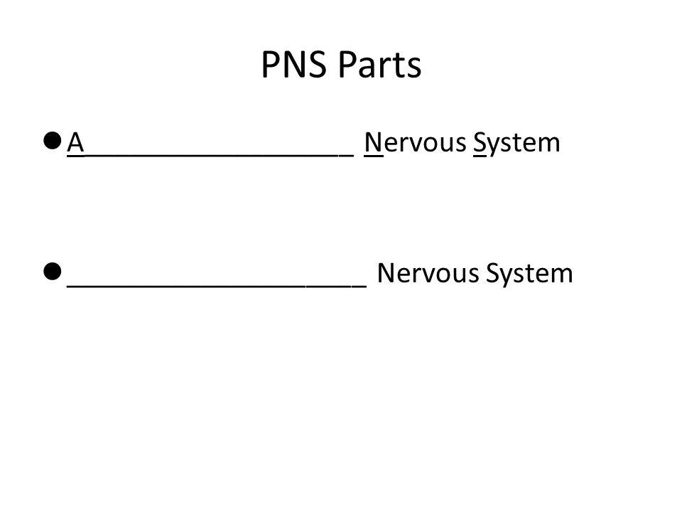 PNS Parts A__________________ Nervous System