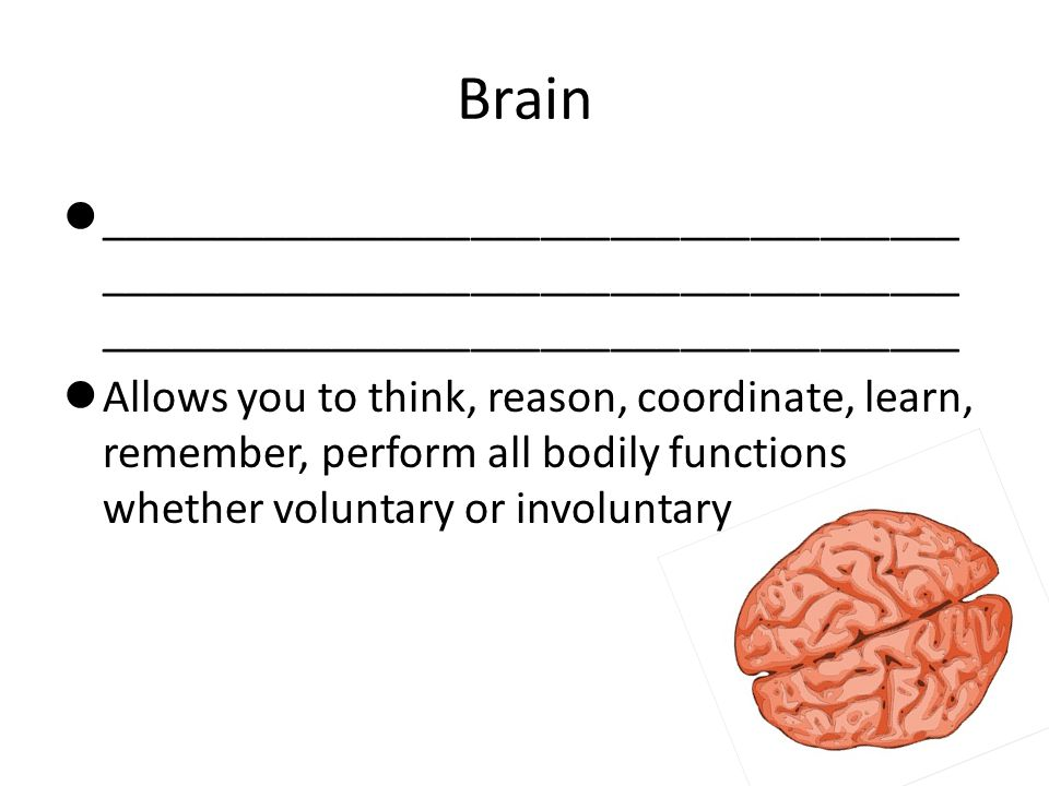 Brain _______________________________________________________________________________________________________________.