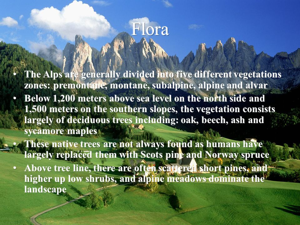 Flora The Alps are generally divided into five different vegetations zones: premontane, montane, subalpine, alpine and alvar.