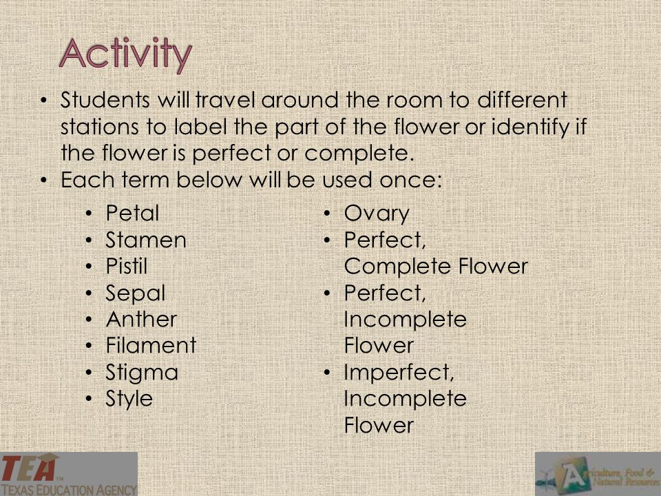 Activity Students will travel around the room to different stations to label the part of the flower or identify if the flower is perfect or complete.