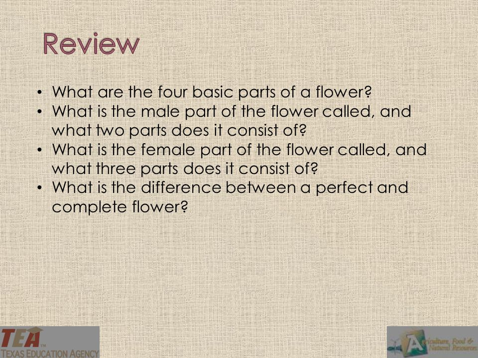 Review What are the four basic parts of a flower