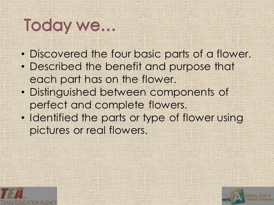 Today we… Discovered the four basic parts of a flower.