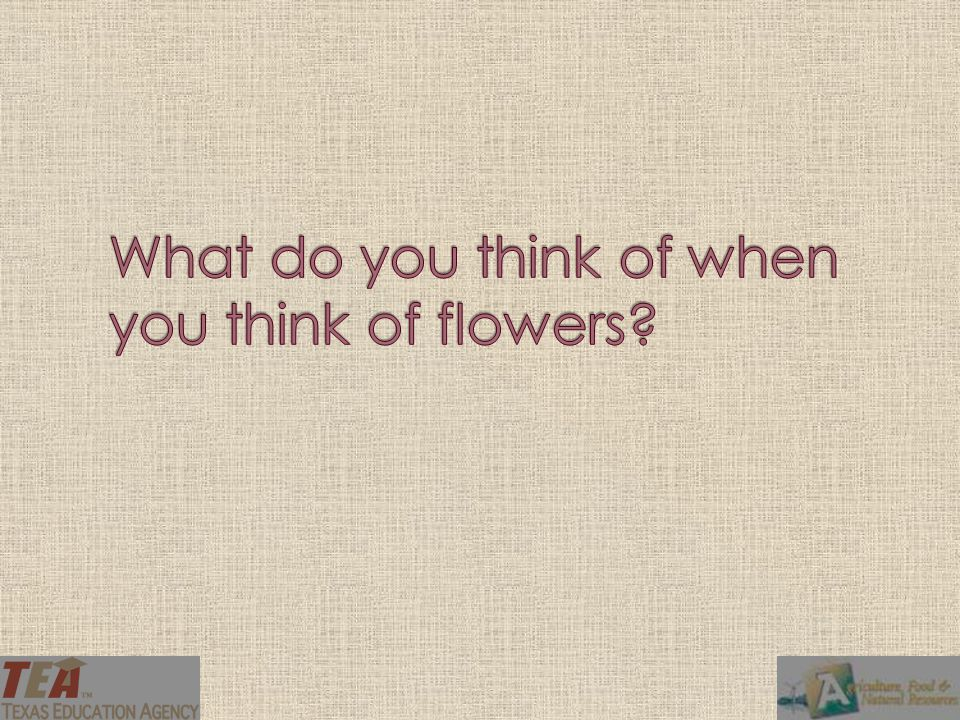 What do you think of when you think of flowers