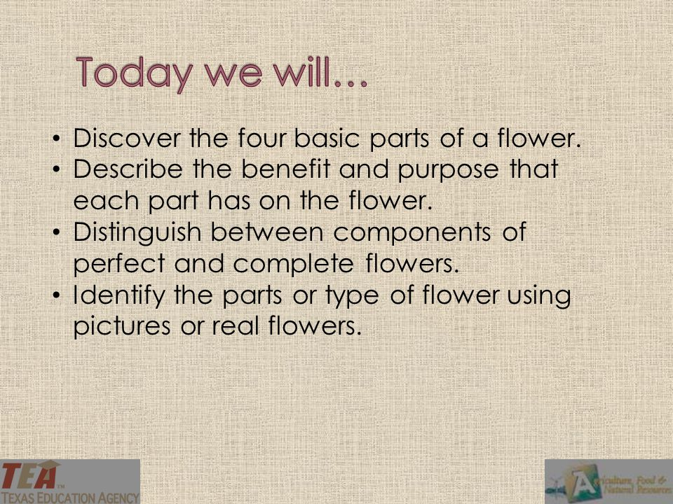 Today we will… Discover the four basic parts of a flower.