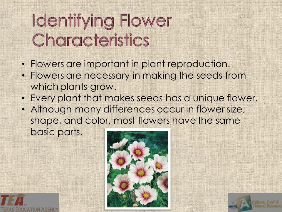 Identifying Flower Characteristics