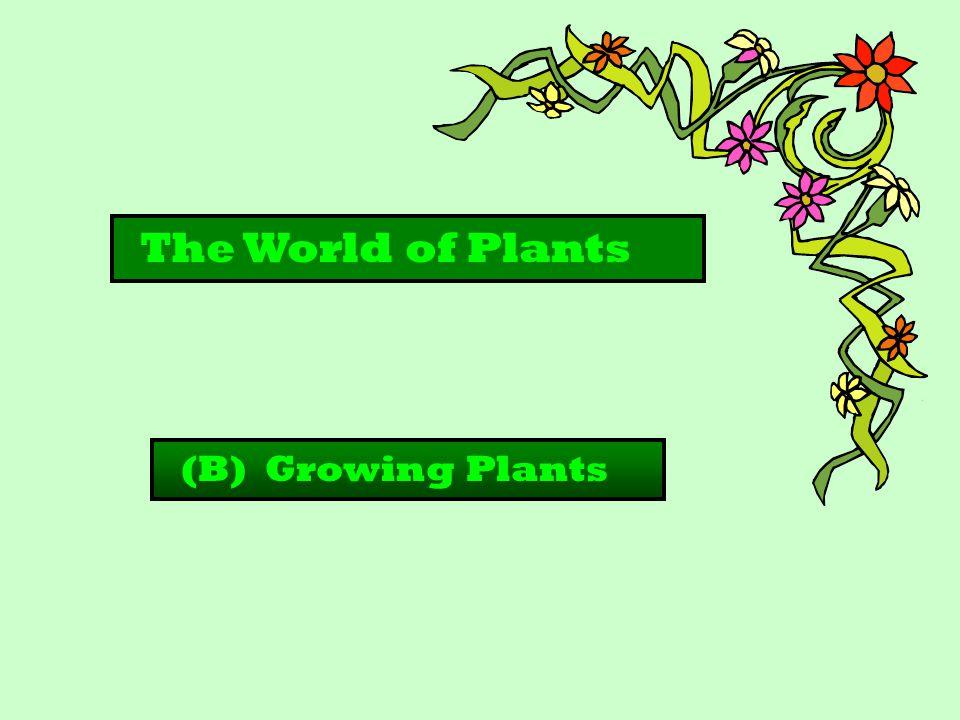 The World of Plants (B) Growing Plants