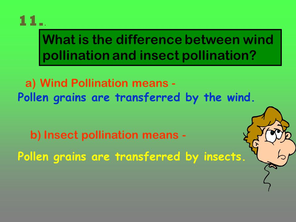 11.. What is the difference between wind pollination and insect pollination Wind Pollination means -