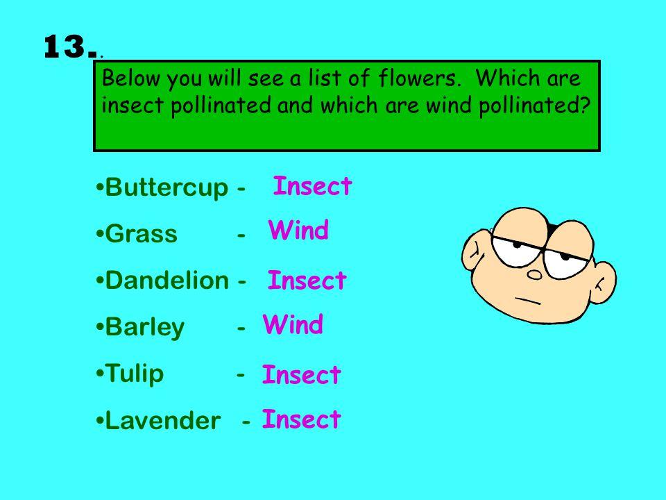 13.. Buttercup - Grass - Dandelion - Barley - Tulip - Lavender -