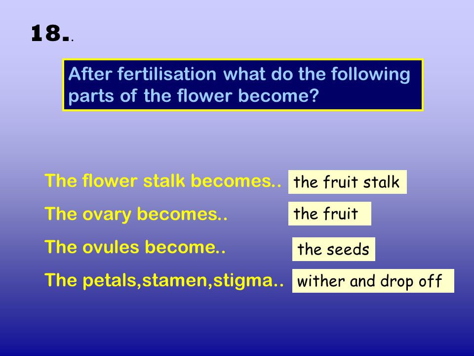 18.. After fertilisation what do the following parts of the flower become The flower stalk becomes..