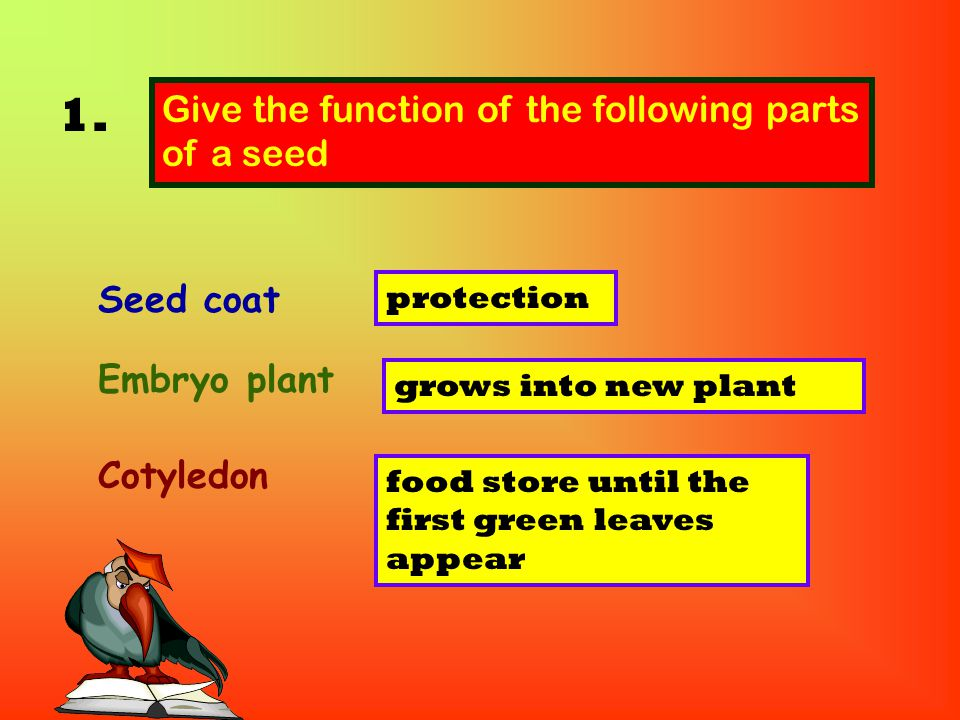 1. Give the function of the following parts of a seed Seed coat