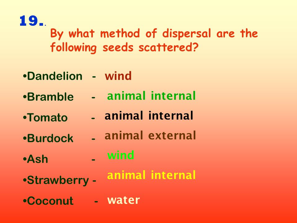 19.. By what method of dispersal are the following seeds scattered