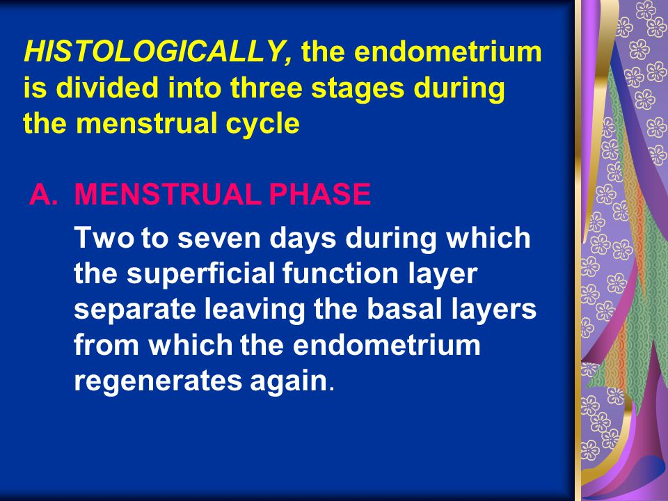 HISTOLOGICALLY, the endometrium is divided into three stages during the menstrual cycle