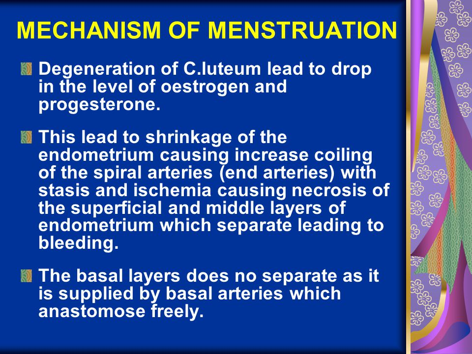 MECHANISM OF MENSTRUATION