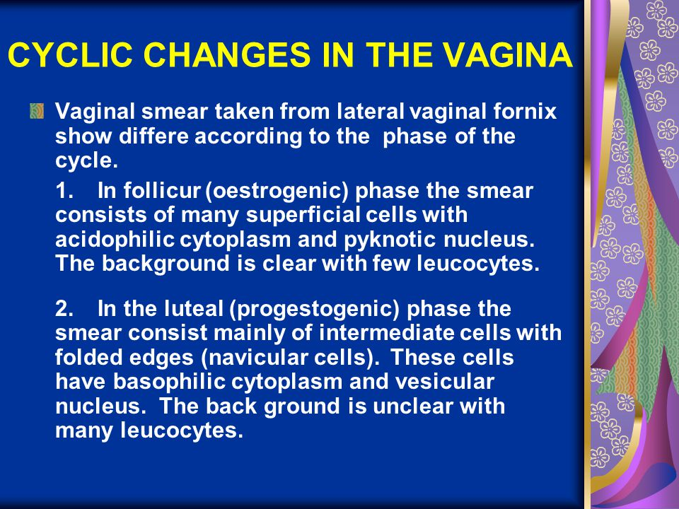 CYCLIC CHANGES IN THE VAGINA