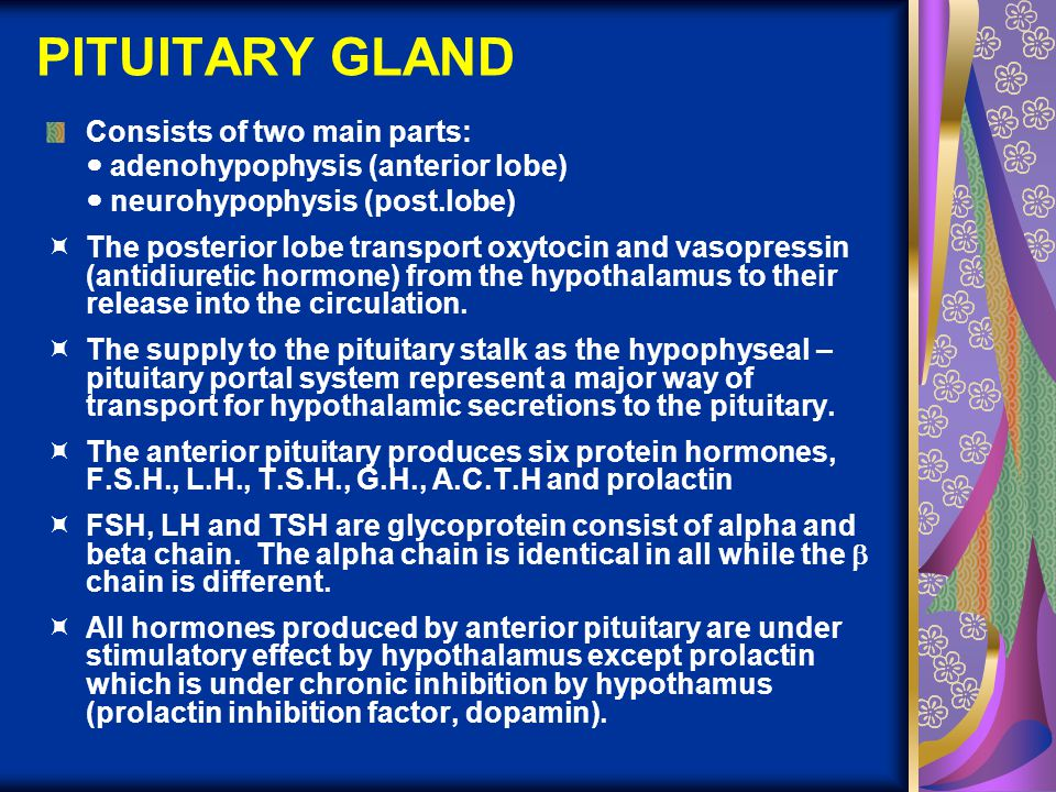PITUITARY GLAND Consists of two main parts:
