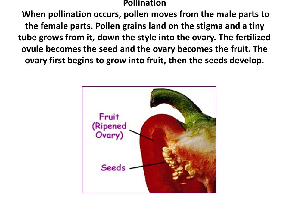 Pollination When pollination occurs, pollen moves from the male parts to the female parts.
