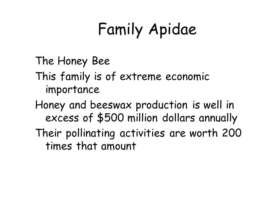 Family Apidae The Honey Bee