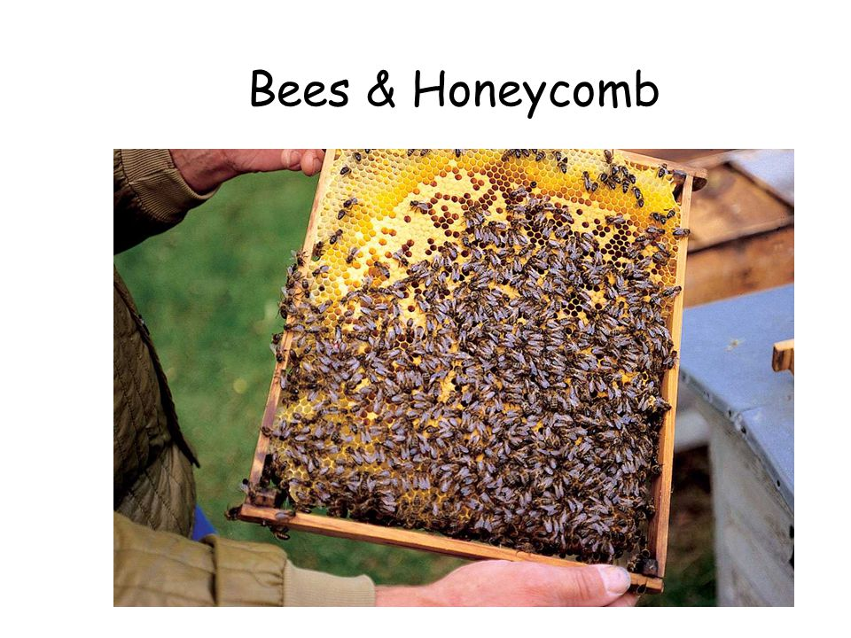 Bees & Honeycomb Bees & Honeycomb