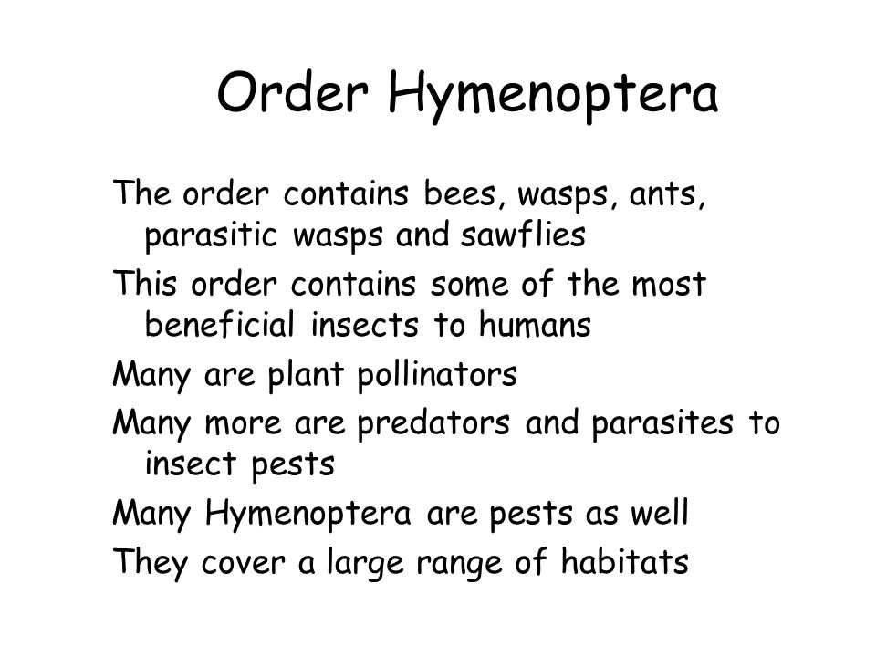 Order Hymenoptera The order contains bees, wasps, ants, parasitic wasps and sawflies.