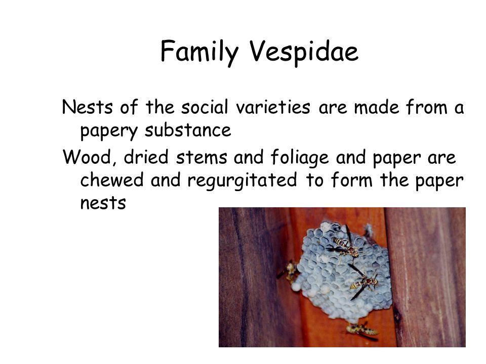Family Vespidae Nests of the social varieties are made from a papery substance.