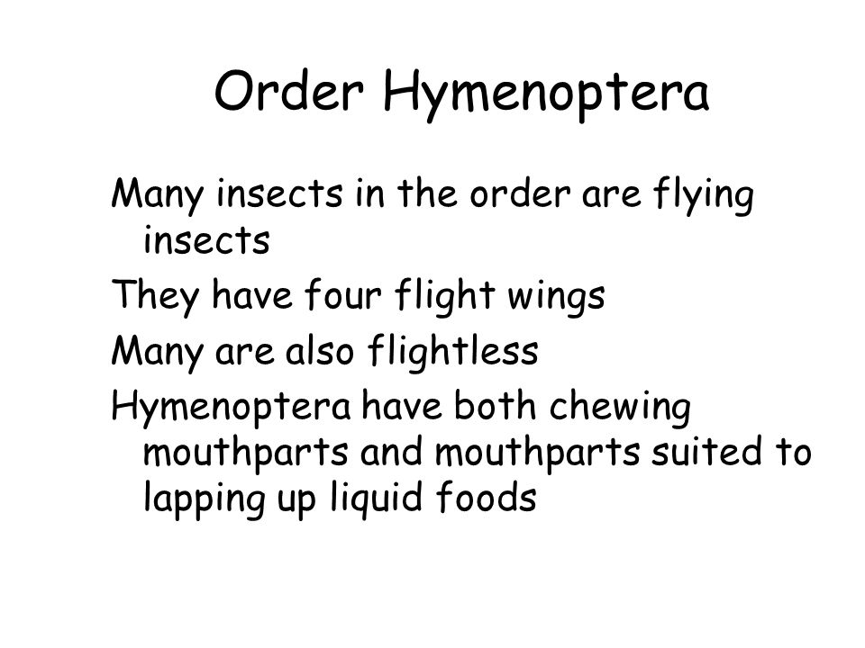 Order Hymenoptera Many insects in the order are flying insects