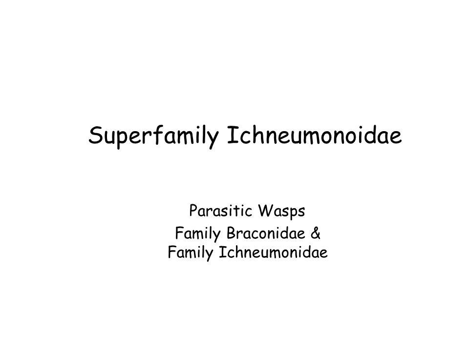 Superfamily Ichneumonoidae
