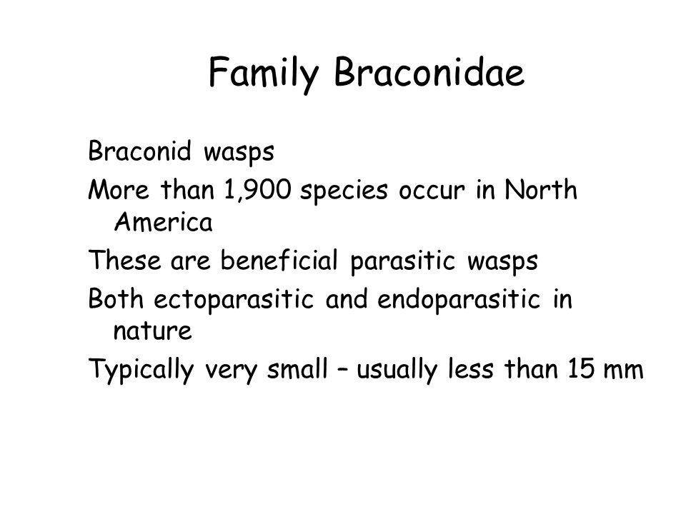 Family Braconidae Braconid wasps