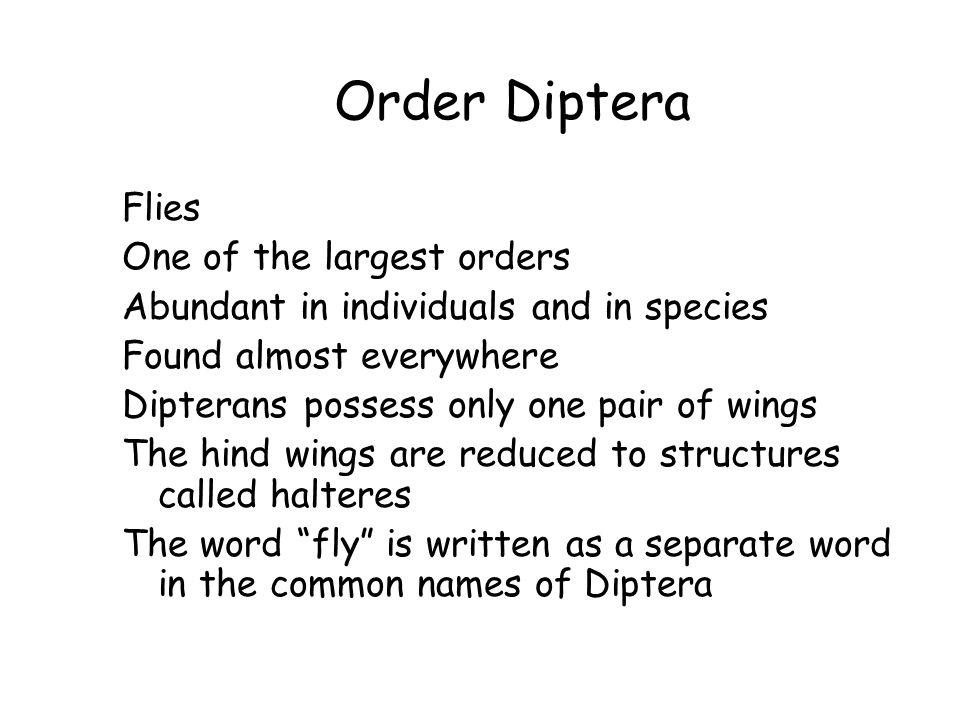 Order Diptera Flies One of the largest orders