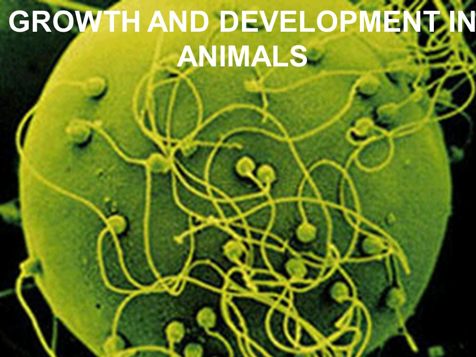 GROWTH AND DEVELOPMENT IN ANIMALS