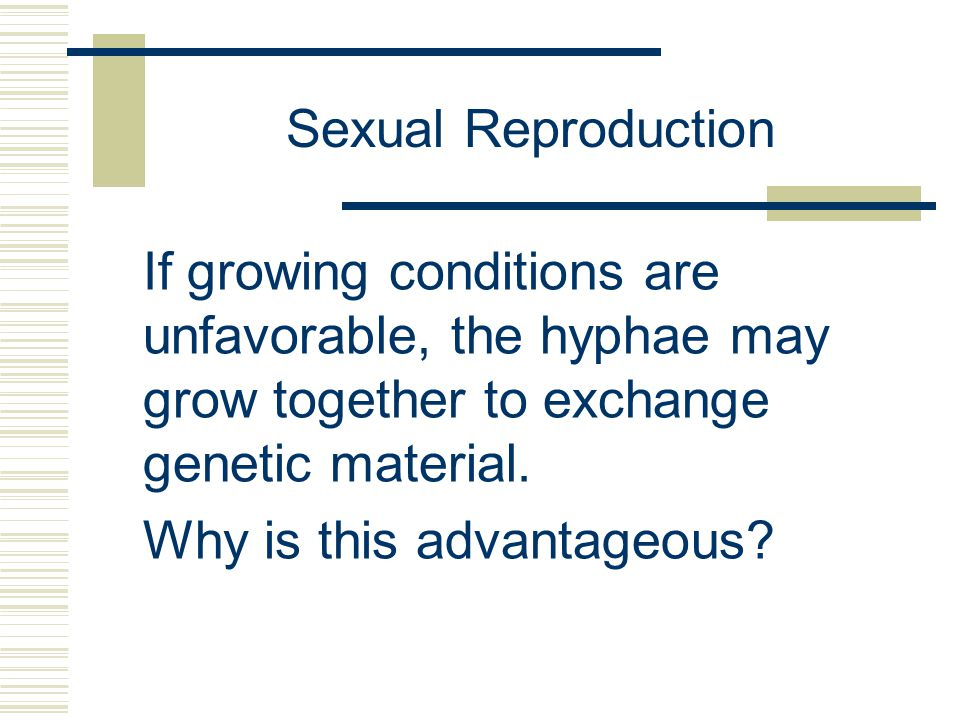 Sexual Reproduction If growing conditions are unfavorable, the hyphae may grow together to exchange genetic material.