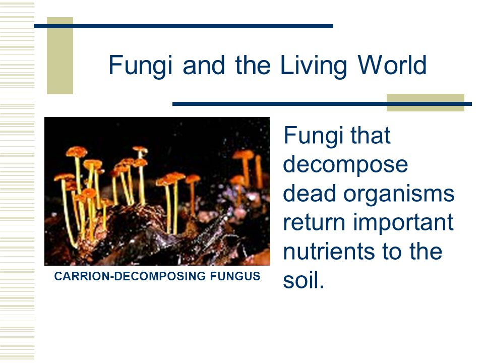 Fungi and the Living World