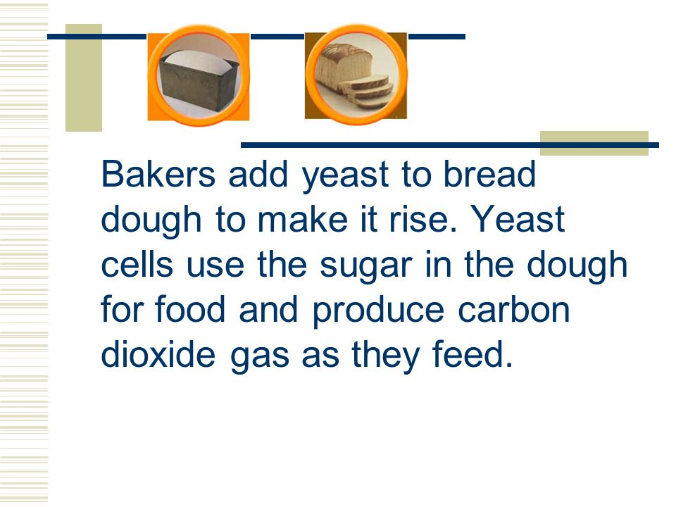 Bakers add yeast to bread dough to make it rise