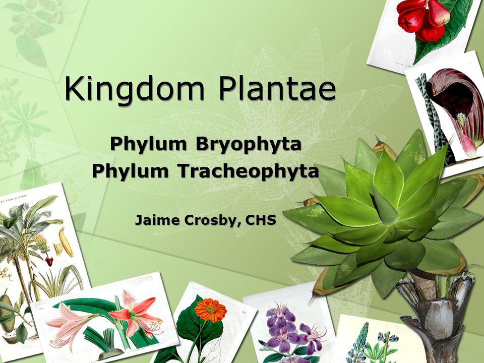 Phylum Bryophyta Phylum Tracheophyta Jaime Crosby, CHS