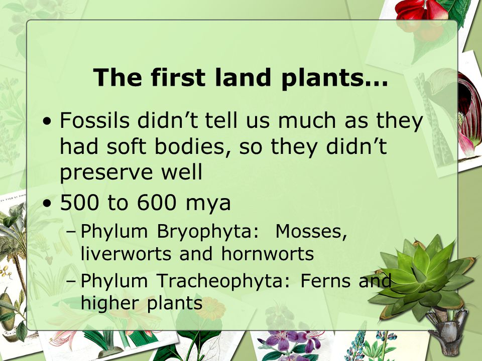 The first land plants… Fossils didn't tell us much as they had soft bodies, so they didn't preserve well.