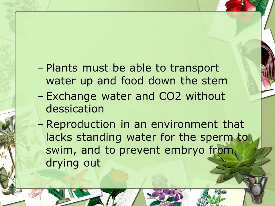 Plants must be able to transport water up and food down the stem