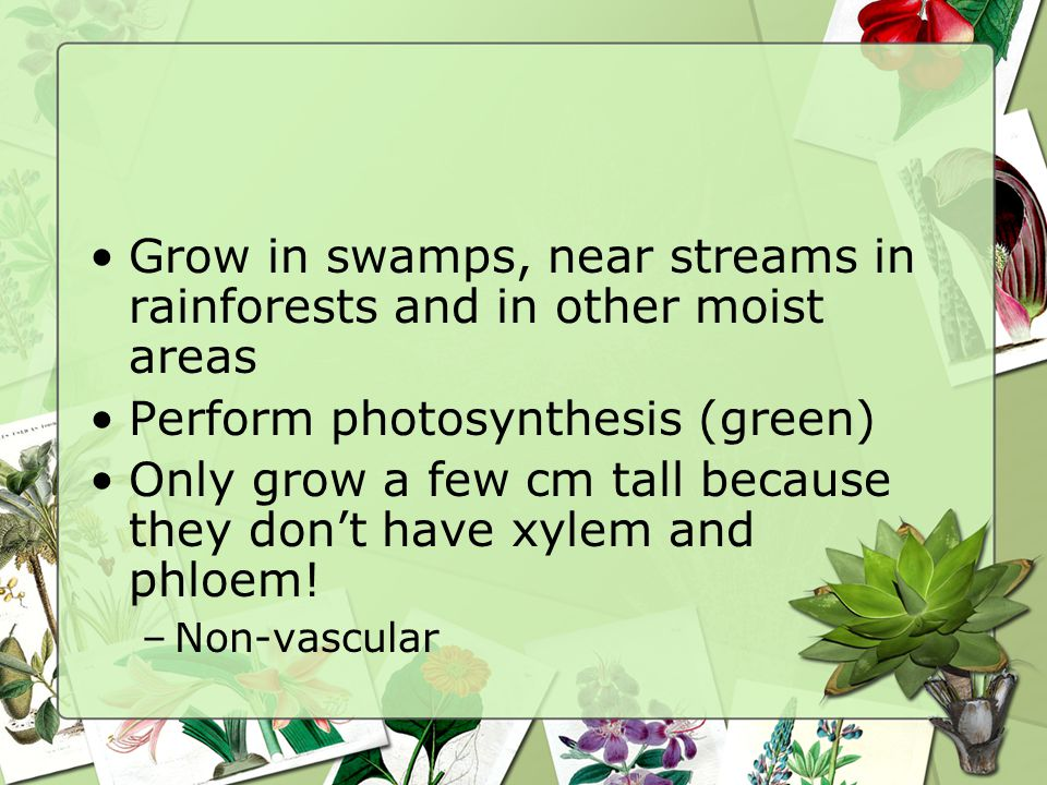 Grow in swamps, near streams in rainforests and in other moist areas