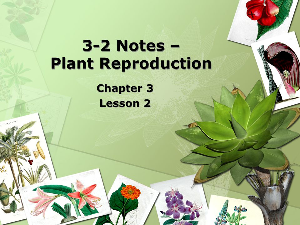 3-2 Notes – Plant Reproduction