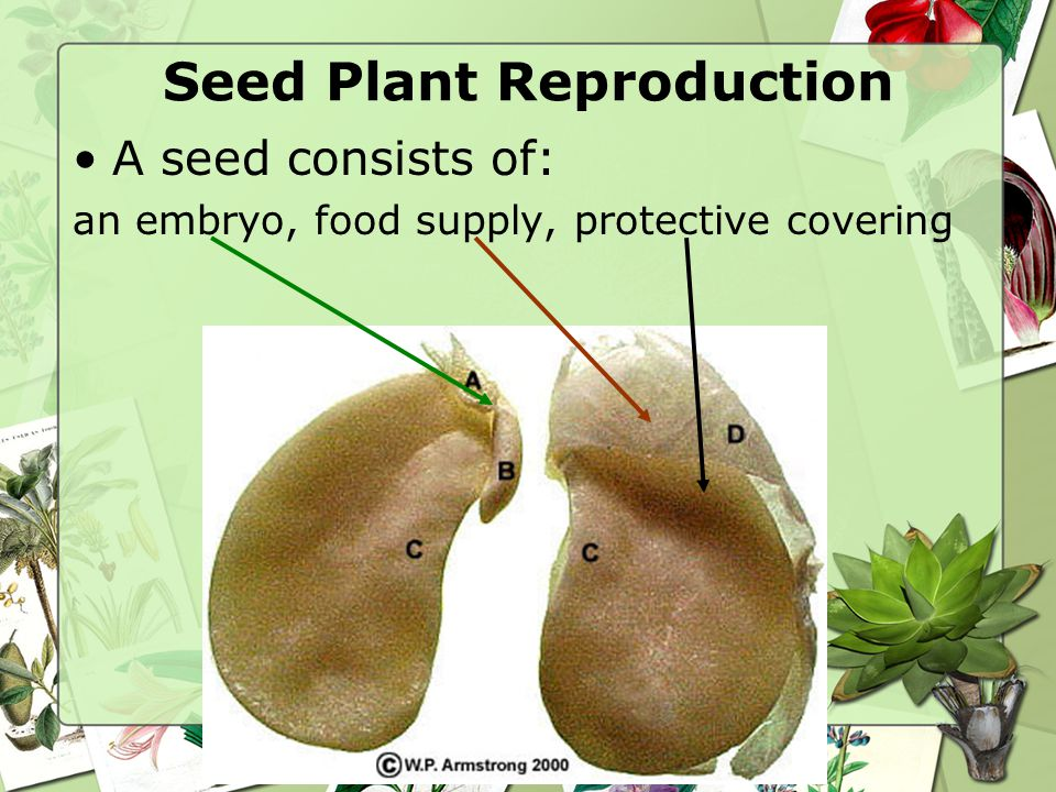 Seed Plant Reproduction