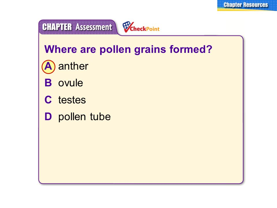 Where are pollen grains formed A anther B ovule C testes