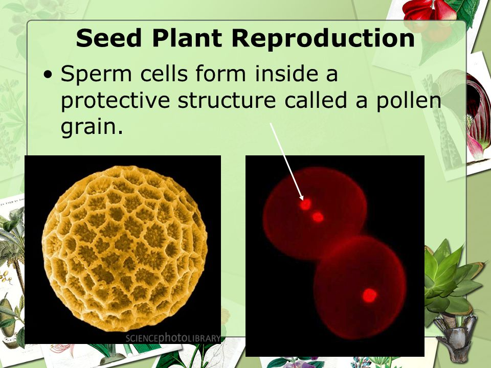 3 2 Notes Plant Reproduction Ppt Download